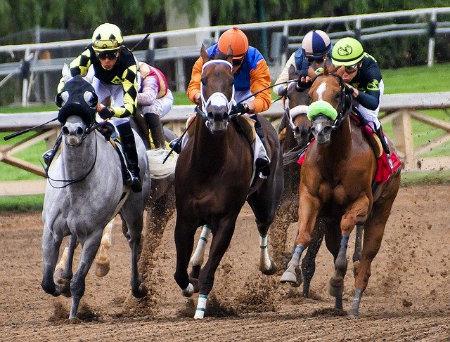 just horse racing big bets